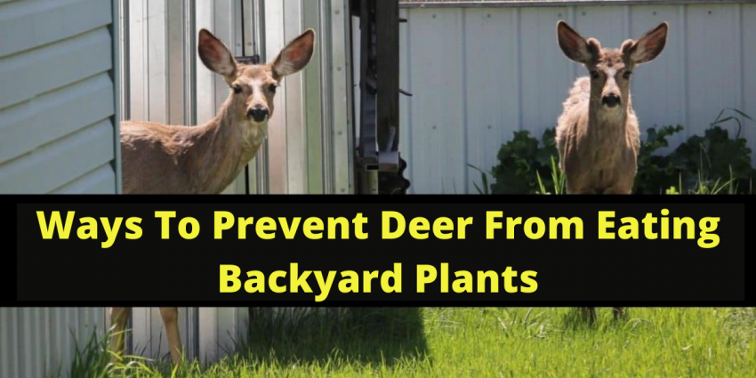 Measure To Prevent Deer From Eating Plants In Your Backyard